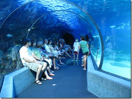 The Open Ocean tunnel