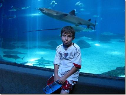 Cameron and a hammerhead shark