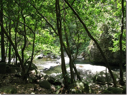 Iao Valley stream