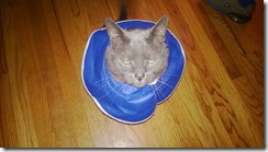 """Rocky and the """"cone of shame"""""""
